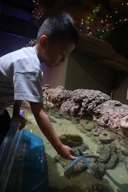 Foto Jakarta Aquarium
